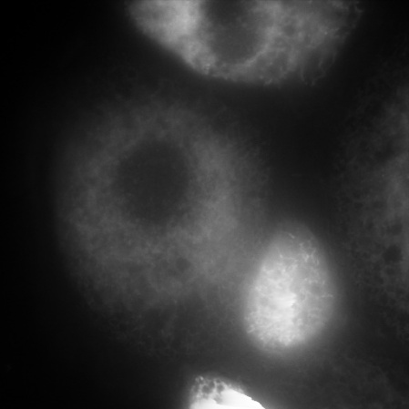Cell_250_1_c2