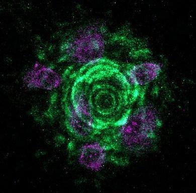 hTCEP 24h RG13-G LMa3bR-03.czi (RGB)