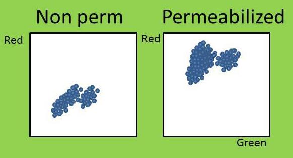 flow perm vs non perm