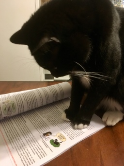 proofreading cat